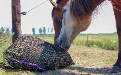 """Alle paarden """"onbeperkt"""" ruwvoer!"""