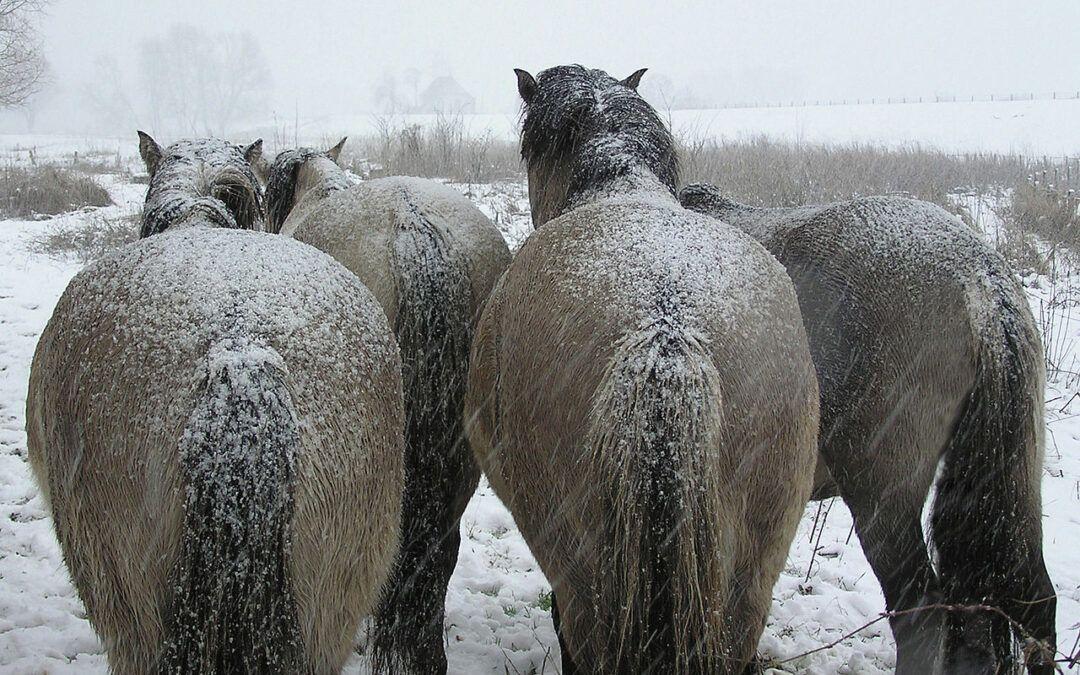 Hoe voer ik mijn paard tegen de kou?