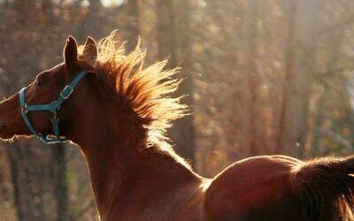 Heeft jouw paard het voorjaar in de bol?