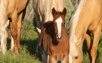 Voeradvies voor opgroeiende paarden