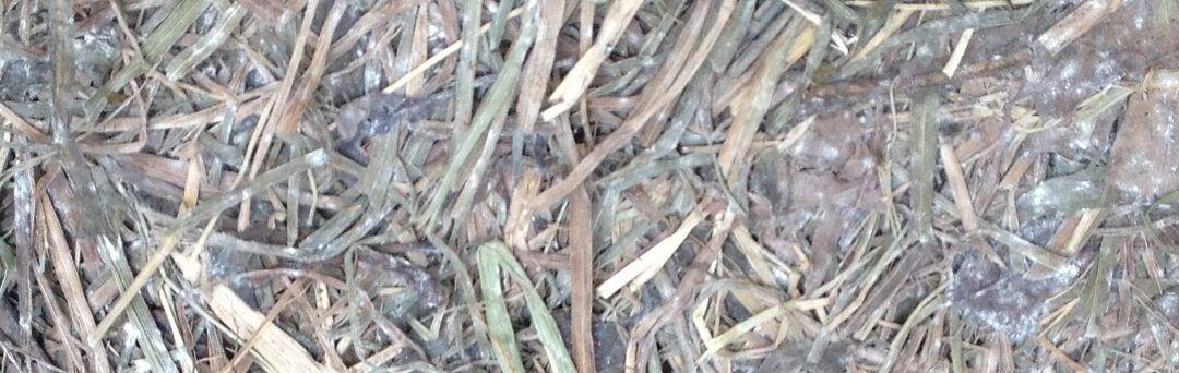 Mycotoxines onder de loep