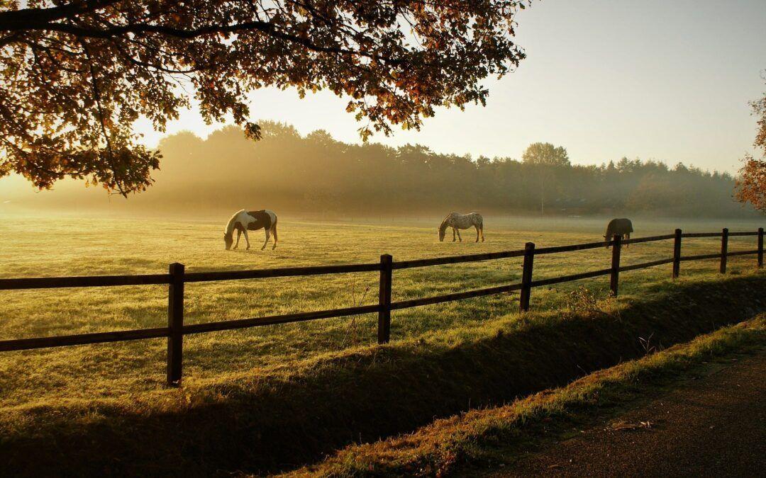 Teken bij paarden in Nederland