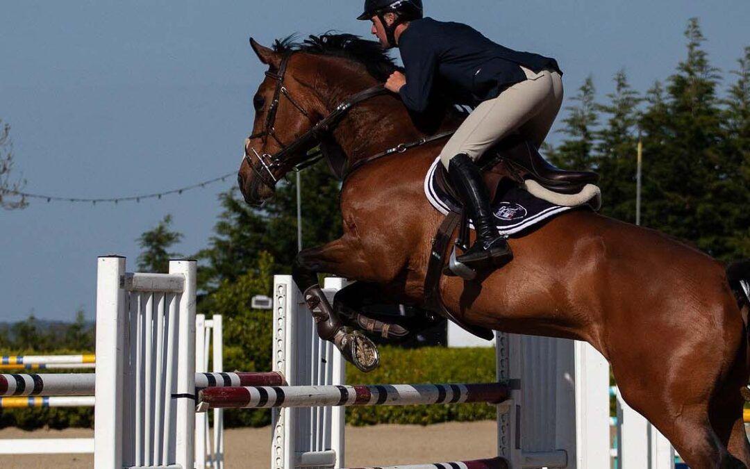 Voeradvies: Sportpaarden en -pony's!